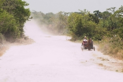 AA001829S-Mennonites-in-buggy-outside-Schipstern-Nature-reserve-Belize-May-2008-01