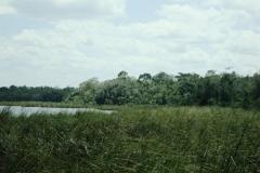 Honey-Camp-riverine-forest